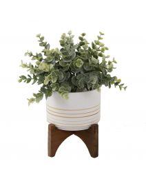 Eucalyptus in 4.75